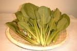 ほうれん草,野菜,情報,栄養