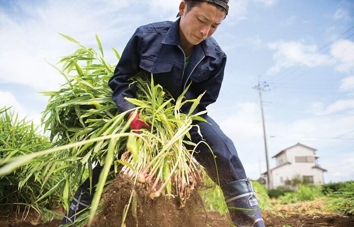 今と、未来の「安心でおいしい」を作る契約栽培の仕組み