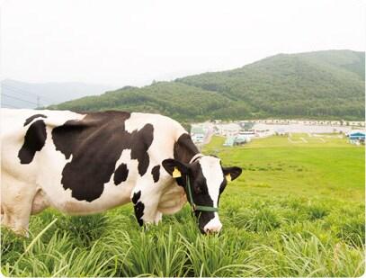 毎日飲む牛乳は、とびっきりおいしいものを。