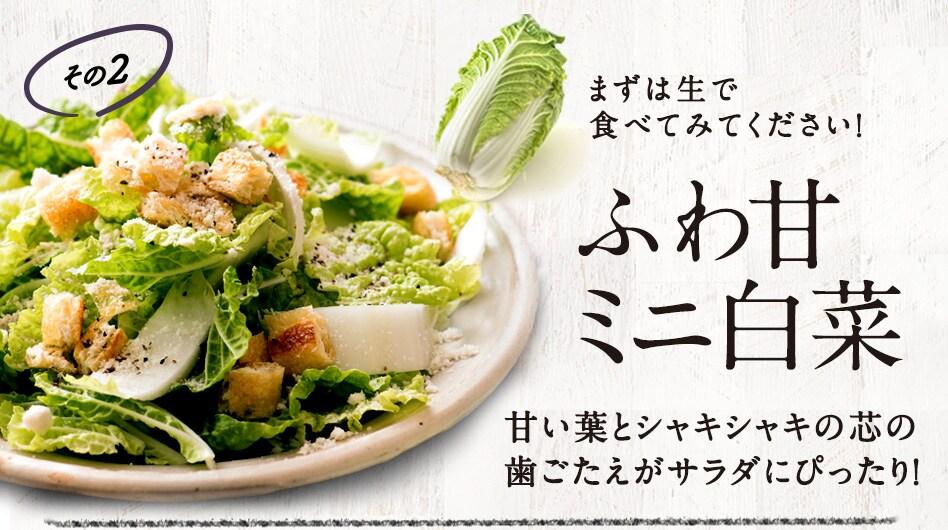 ふわ甘ミニ白菜