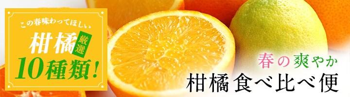 柑橘食べ比べ便