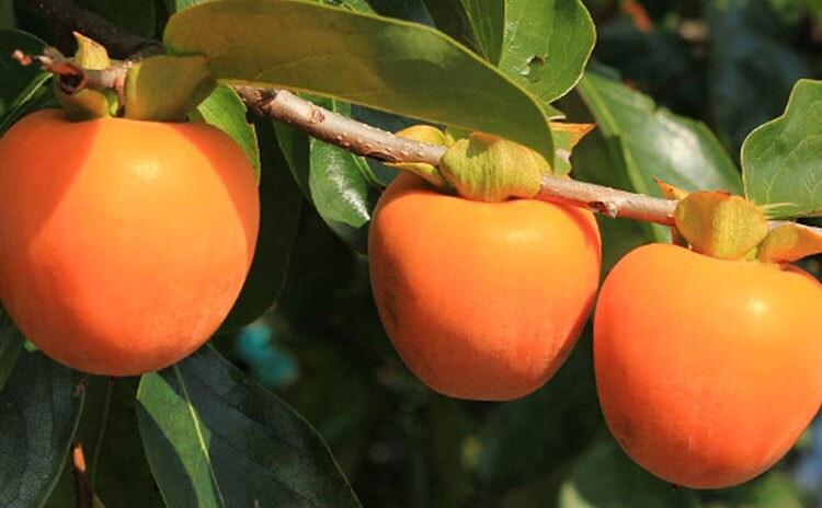 砂糖不使用。完熟した市田柿の自然で優しい甘み:イメージ