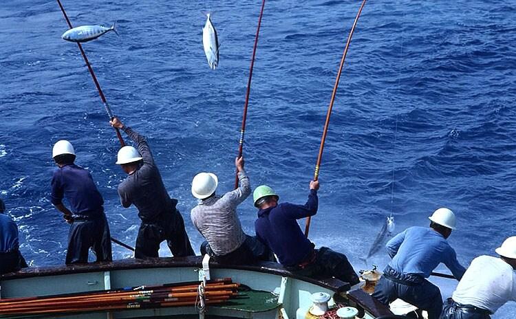 伝統の一本釣りで漁獲時の痛みを最小限に:イメージ