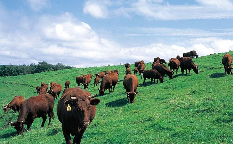 大自然で大切に育てられた短角牛:イメージ