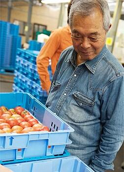 収穫され出荷を待つトマトたちを、優しい目で見守る照喜治じい