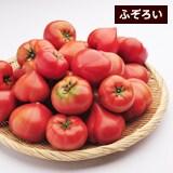 わけあり高糖度トマト(約2kg)
