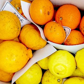 鶴田さんのわけあり柑橘