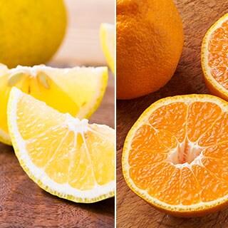 いろどり春の柑橘3種