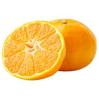 段々畑から届く柑橘便り