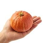 プチぼっちゃんかぼちゃ(赤 北海道産 大崎さん他)