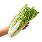かわいいミニサイズ!ゆるふわサラダ白菜(長野県産)
