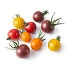 【◎ちゃんとOisix】4色カラフルミニトマト(千葉県産)