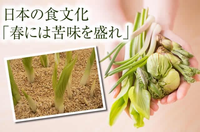 タラ の 芽 栄養